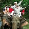 カオヤイ国立公園の野生の象も自然遺産の一部です