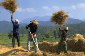 タイの農村